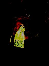 シャーロット・ケイト・フォックス 5 [無断転載禁止]©2ch.netfc2>1本 YouTube動画>37本 ->画像>5枚