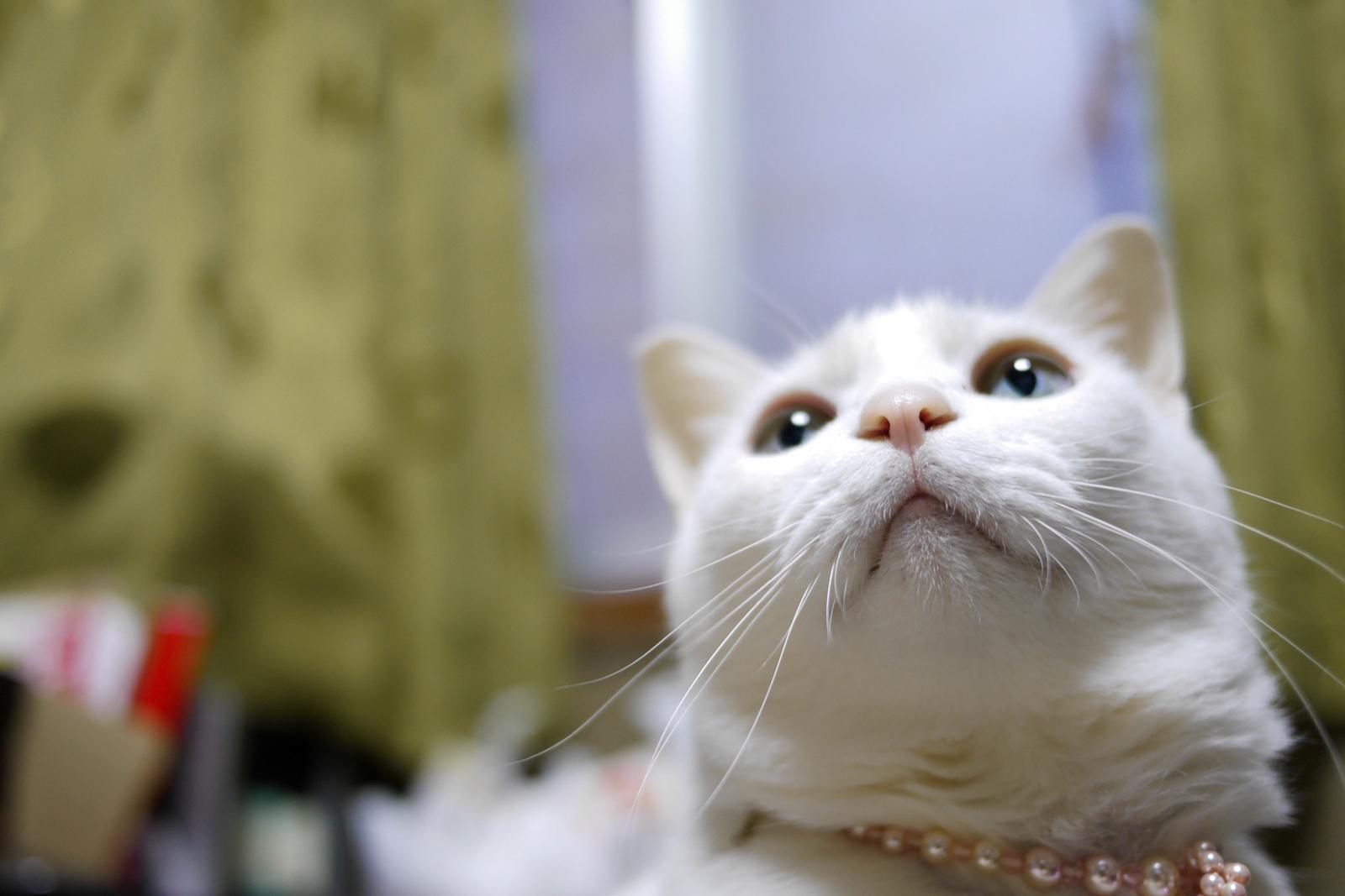 ≡▲ 猫撮り専科 99匹目 ≡゚ェ゚≡ [無断転載禁止]©2ch.netYouTube動画>1本 ->画像>427枚
