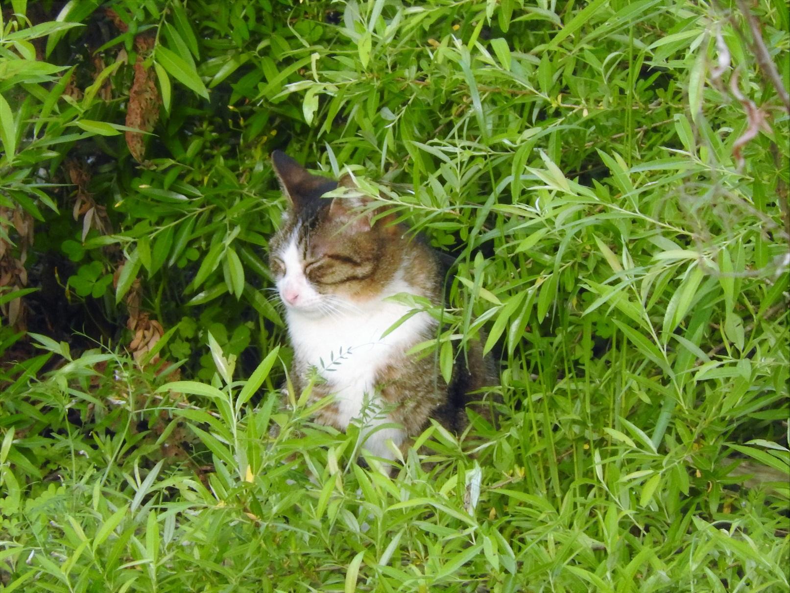 おいしそうな脚の女子校生 240脚目猫ガイジ隔離スレ [無断転載禁止]©bbspink.com->画像>3693枚