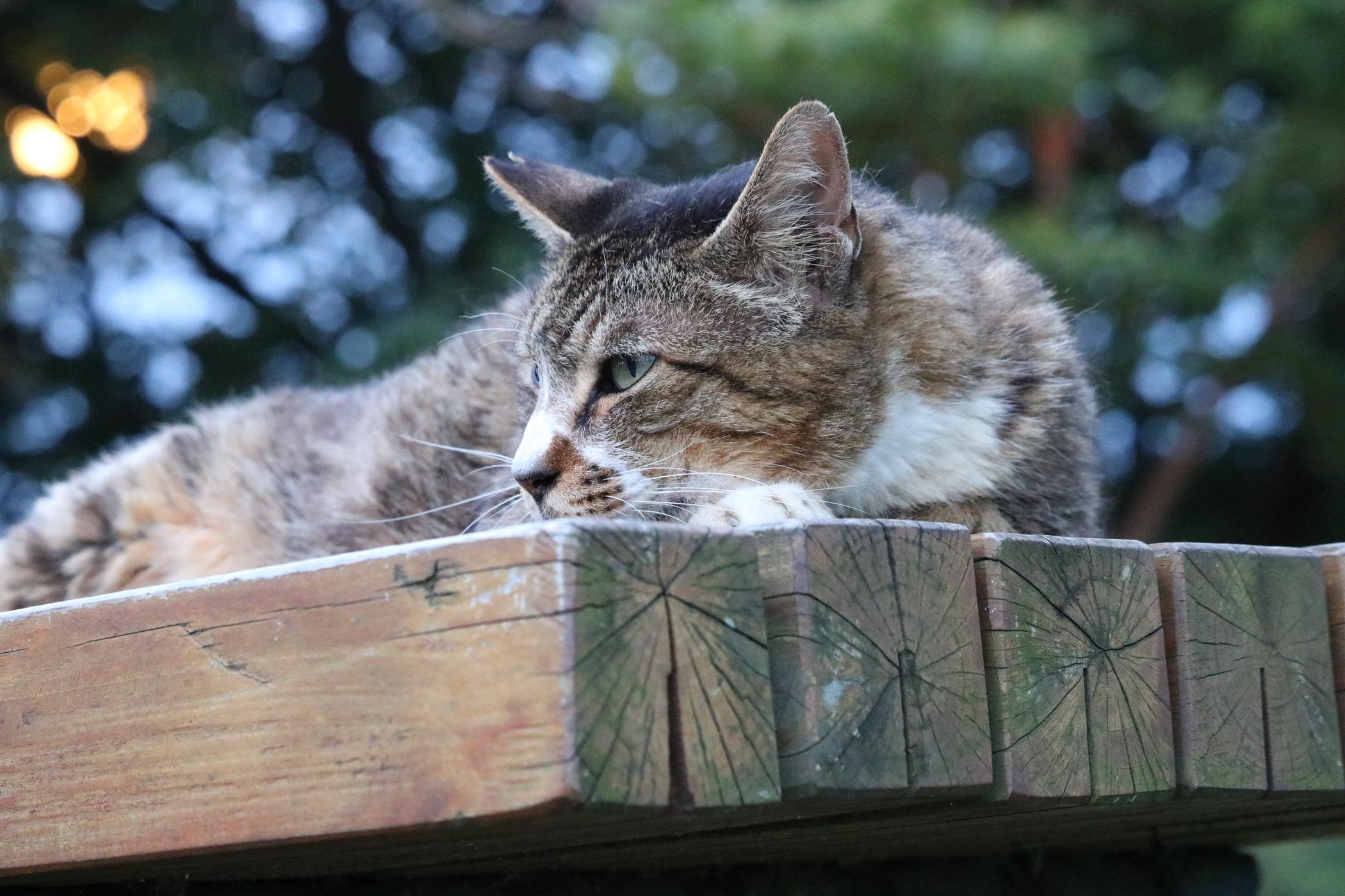 猫貼り鳥貼りかもーん パン○らあP [無断転載禁止]©bbspink.comYouTube動画>1本 ->画像>3566枚