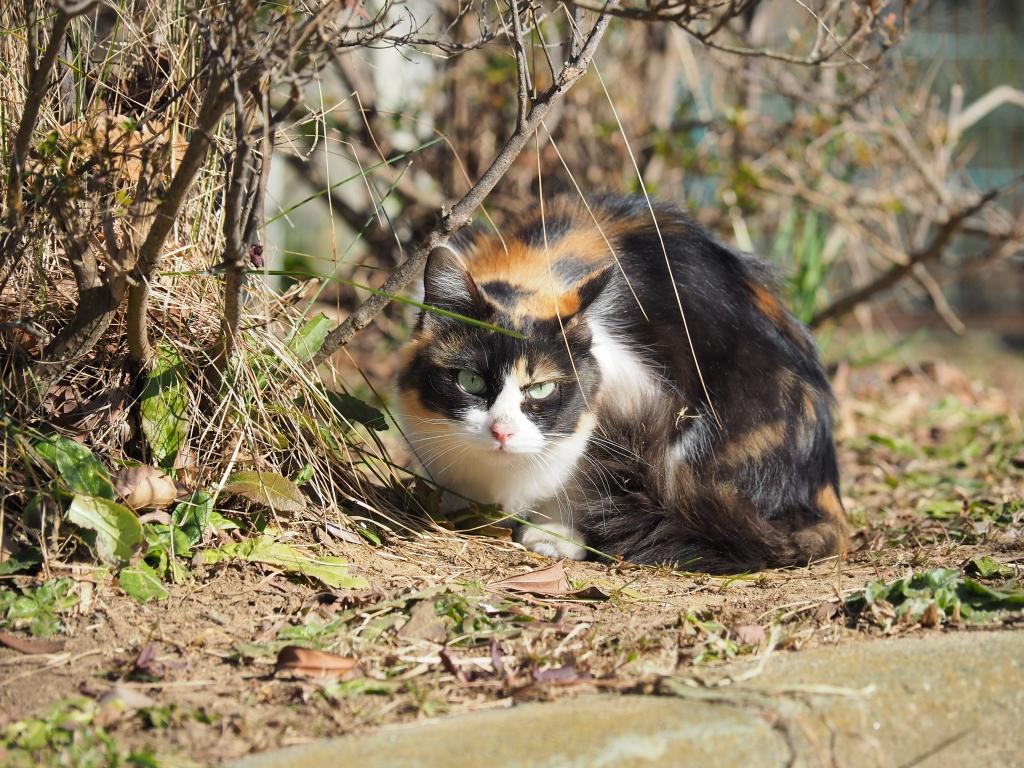 パン チラ part8 【猫禁止】 [無断転載禁止]©bbspink.com->画像>3637枚