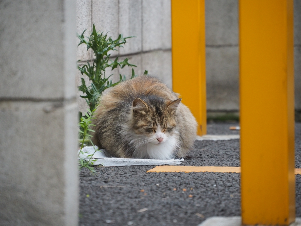 パンチラpart8 【猫禁止】 [無断転載禁止]©bbspink.com->画像>2328枚